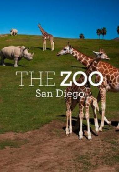 The Zoo: San Diego 2019