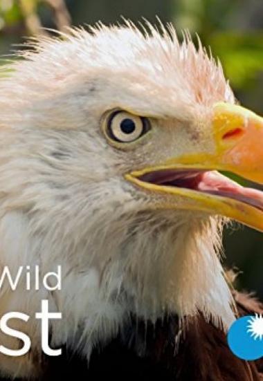 Wild Wild East 2016