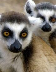 Land of Primates 2016
