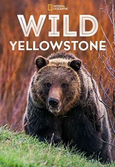 Wild Yellowstone 2015