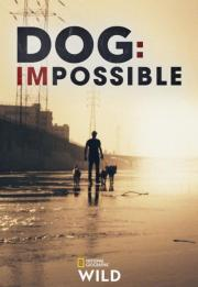 Dog: Impossible 2019