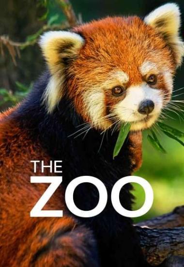 The Zoo 2017