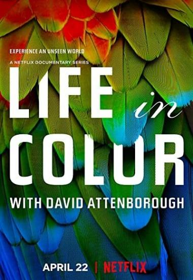Life in Colour 2021
